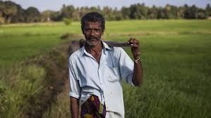 CIC fertilizer kills farmer