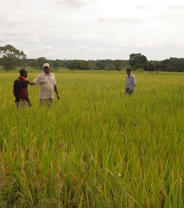 field-in-pasyala