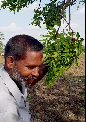 organic paddy cultivation