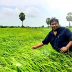 roshan perera-traditional sri lankan rice-suwandel-suwandal-kuruluthuda-pachchpaperumal-kaluheenati-akshata-farmers-srilankanrice (7)